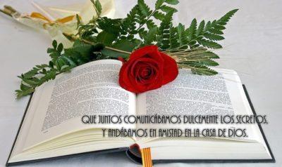 flores-con-versiculos-cristianos-para-amor-y-amistad