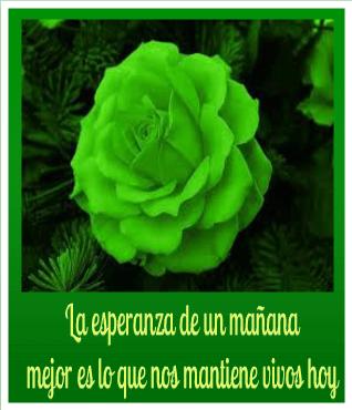 fotos-de-rosas-verdes