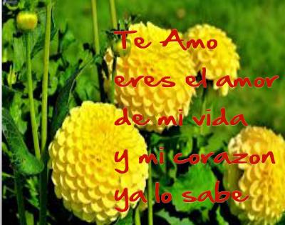 imágenes de amor con flores amarillas