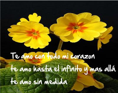 imágenes de flores amarillas para facebook