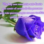 Imágenes De Rosas Azules Con Frases Bonitas Para Dedicar