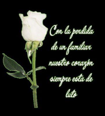 imágenes de rosas blancas con frases de luto familiar