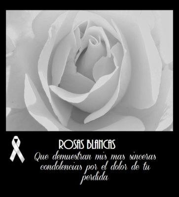 imágenes de rosas blancas con mensajes de condolencias