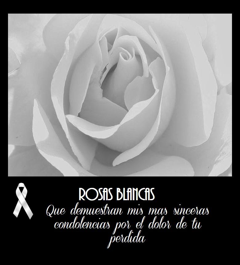 Las Mejores Imágenes De Rosas Blancas Para Luto Imágenes De Flores