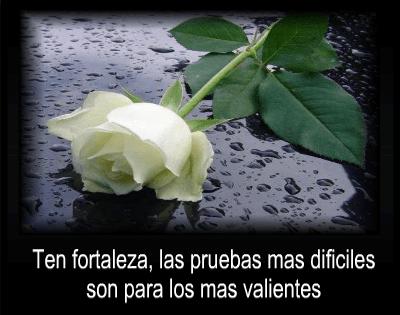 imagenes-de-rosas-blancas-de-luto-con-mensajes