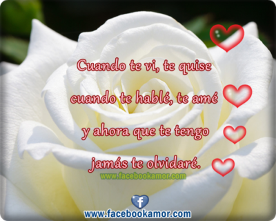 imagenes-de-rosas-blancas-grandes-para-facebook