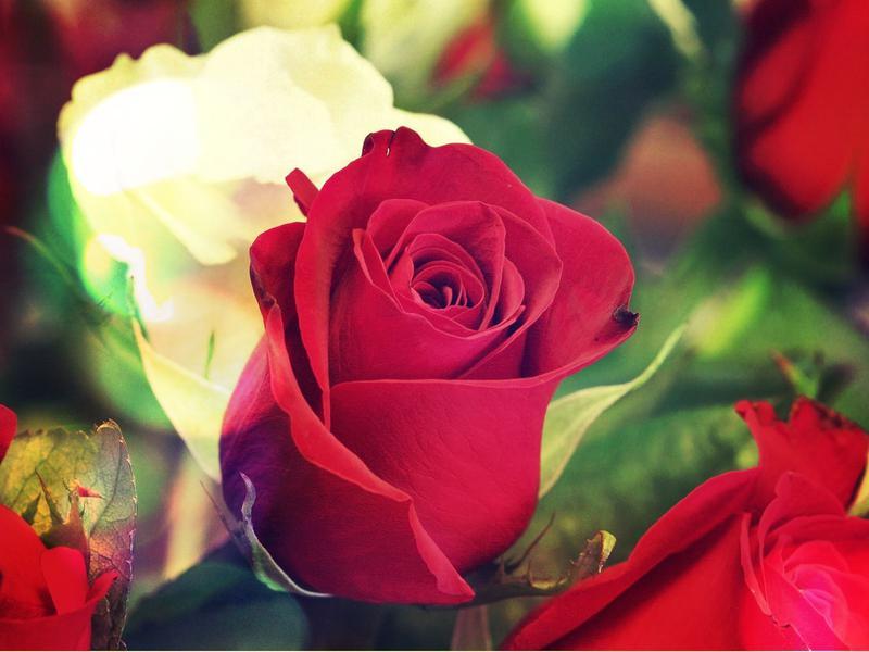 Hermosas Imágenes De Flores Con Nombres Y Su Origen