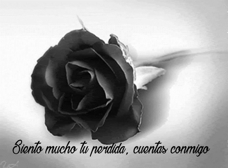 Imágenes De Rosas Negras De Luto Tristeza Pesar Pena Dolor