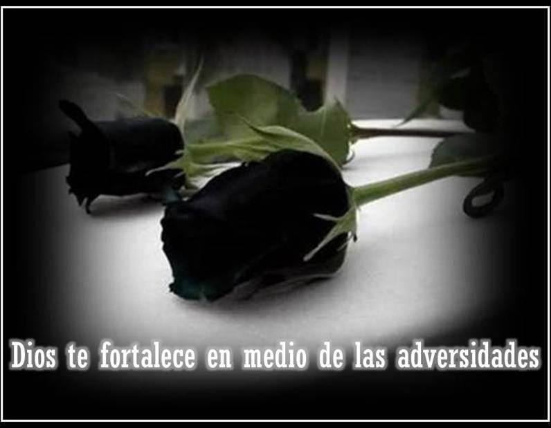 Imagenes De Rosas Negras De Luto Tristeza Pesar Pena Dolor