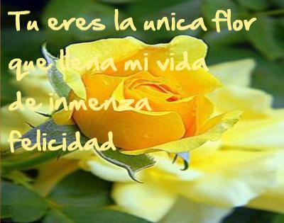 imagenes de rosas amarillas con frases de amor