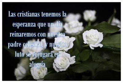 imágenes de rosas blancas con frases de luto cristianas
