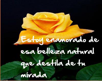 rosas amarillas con frases de amor para dedicar