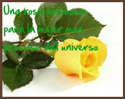 rosas amarillas con frases romanticas
