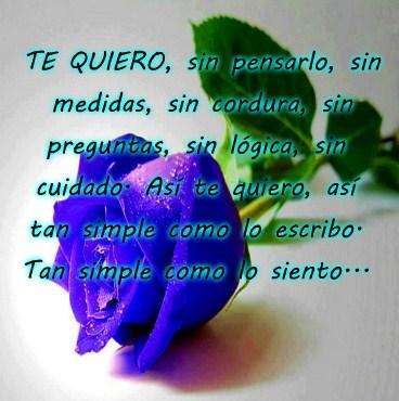 Imagenes De Rosas Azules Con Frases Bonitas Para Dedicar Imagenes