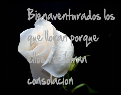 rosas blancas con frases para luto