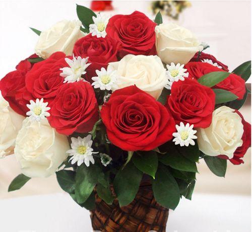 Lindas Imágenes De Rosas Blancas Y Rojas Para Descargar Gratis