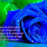Las Mejores Imágenes De Flores Azules Con Frases De Amor