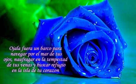 Preciosas Imágenes De Rosas Azules Con Frases De Amor Tiernas