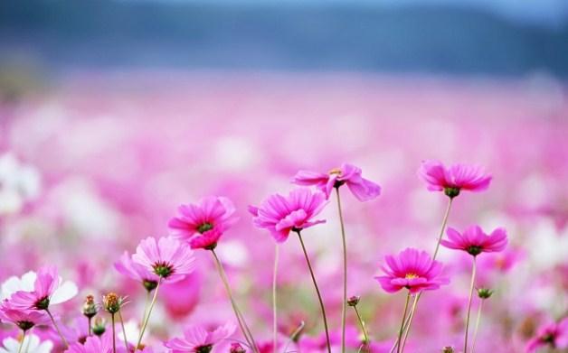 imagenes-de-flores-hermosas-para-descargar-gratis
