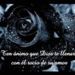 Imágenes De Flores Negras De Luto Tristeza Duelo Y Pesar