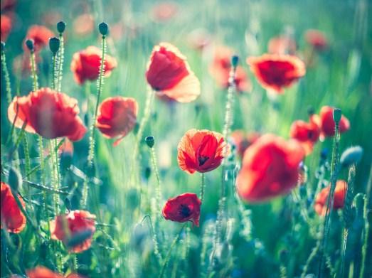 Imágenes De Flores Para Tablet Fotos Bonitas Flores