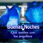 Imágenes De Buenas Noches Con Rosas Azules Muy Hermosas