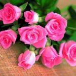 Imágenes De Flores Hermosas Para Descargar Gratis Al Celular
