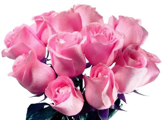 Imagenes De Flores Hermosas Para Descargar Gratis Al Celular