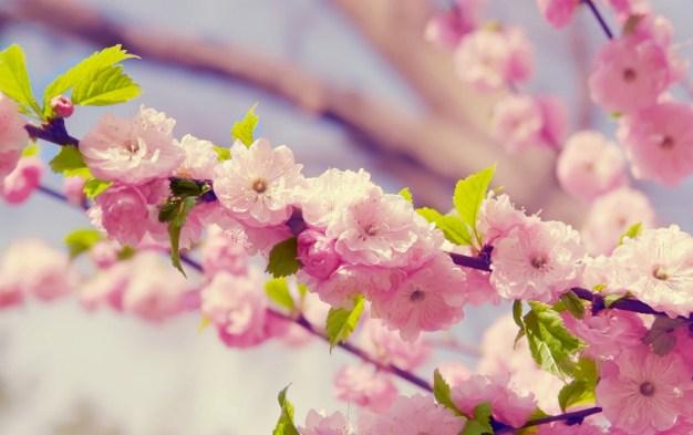 imagenes-de-flores-hermosas-para-descargar