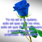 Hermosas Imágenes De Rosas Azules Con Poemas Para Todos