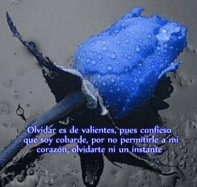 imagenes-de-rosas-azules-con-poemas-de-amor