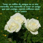 Hermosas Imágenes De Rosas Blancas Con Frases De Amistad
