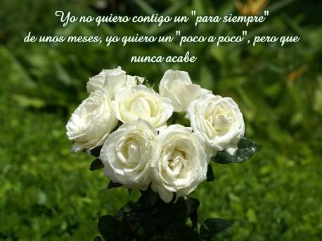 Imagenes De Ramos De Rosas Blancas Con Frases De Amor Imagenes De