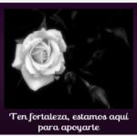 Imágenes De Rosas Blancas Con Frases De Luto Y Fortaleza