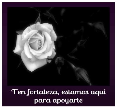 imagenes-de-rosas-blancas-con-frases-de-luto-y-fortaleza