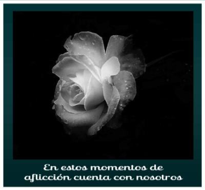 imagenes-de-rosas-blancas-de-luto