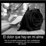 Imágenes De Rosas Negras Con Pensamientos De Luto Pena Dolor