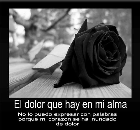 Imagenes De Rosas Negras Con Pensamientos De Luto Pena Dolor