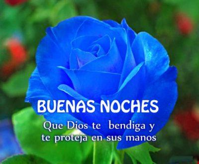 rosas-azules-con-frases-de-buenas-noches