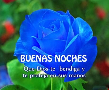 Imagenes De Buenas Noches Con Rosas Azules Muy Hermosas Imagenes