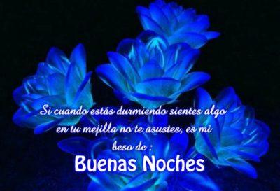 rosas-azules-de-buenas-noches