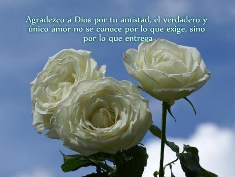 Hermosas Imagenes De Rosas Blancas Con Frases De Amistad Imagenes