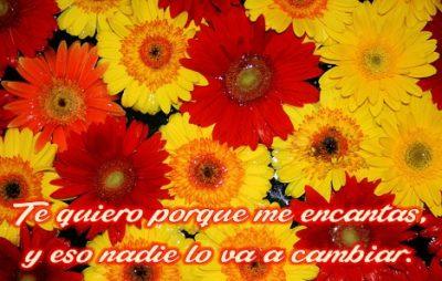 flores-hermosas-con-frases-de-amor-para-whatsapp