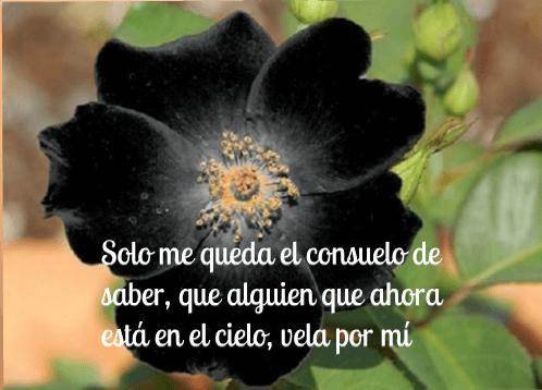 fotos-de-flores-negras-de-luto