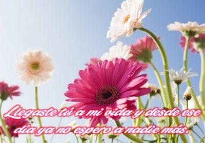 imagenes-de-flores-hermosas-con-frases-de-amor