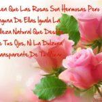 Las Mejores Imágenes De Rosas Con Frases Bonitas Para Todos