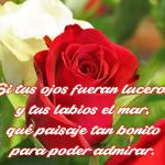 Imágenes De Rosas Con Poemas Hermosos Para Dedicar