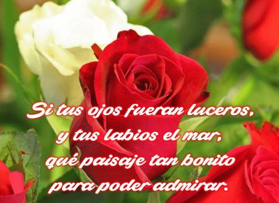 imagenes-de-rosas-con-poemas-de-amor