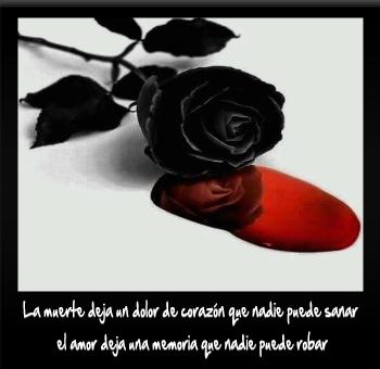 Imágenes De Rosas Negras Con Sangre Y Frases De Pena Y Dolor