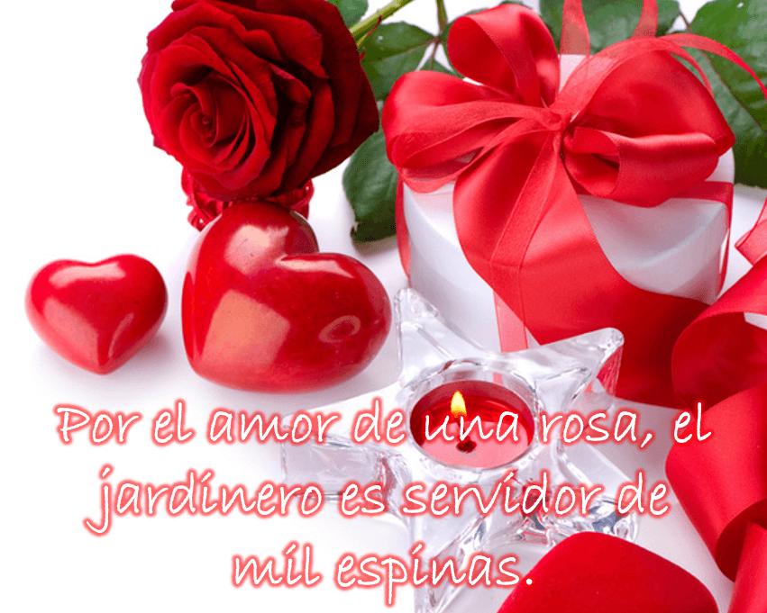 Rosas Rojas Con Frases De Amor: Imagenes De Amor Con Rosas Rojas Imagenes Para Reflexionar
